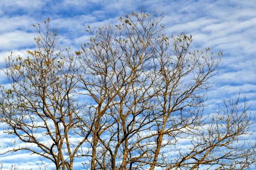 Branches et ciel de novembre