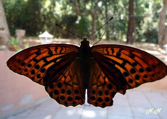 papillon-vitre.jpg
