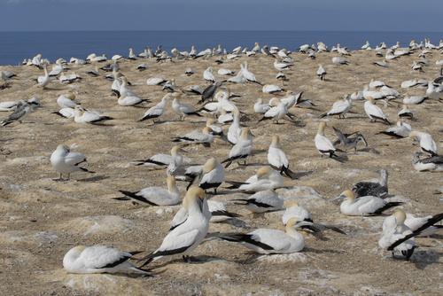 """A - """"L'Île des chasseurs d'oiseaux"""""""