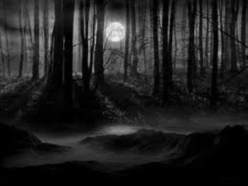 forêt lune