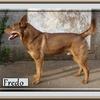 Fredo 3