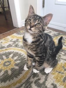 Winston mon chaton