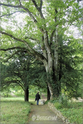 Abbaye de Daoulas Finistère le parc