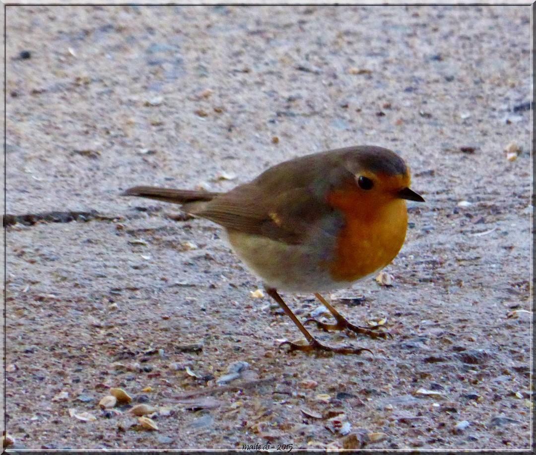 Petits oiseaux maite du gers la corse for Les petits oiseaux