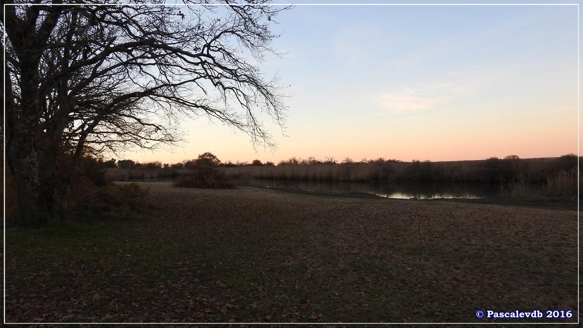 Réserve ornitho du Teich - Décembre 2016 - 13/13