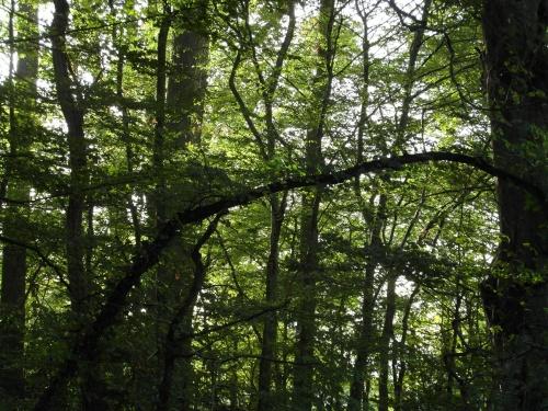 En forêt 2