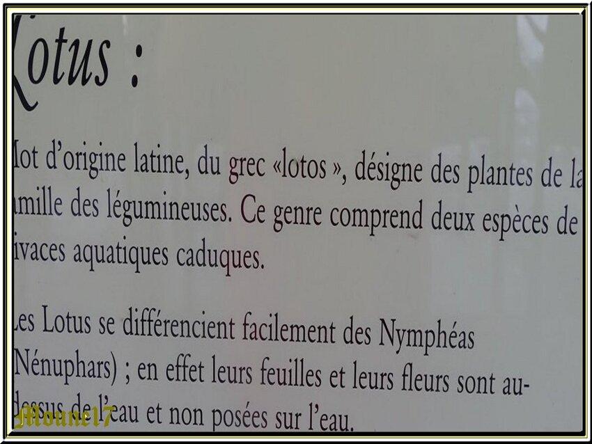 Le lac des Lotus en Vendée