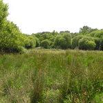 Notre site: Prairie humide