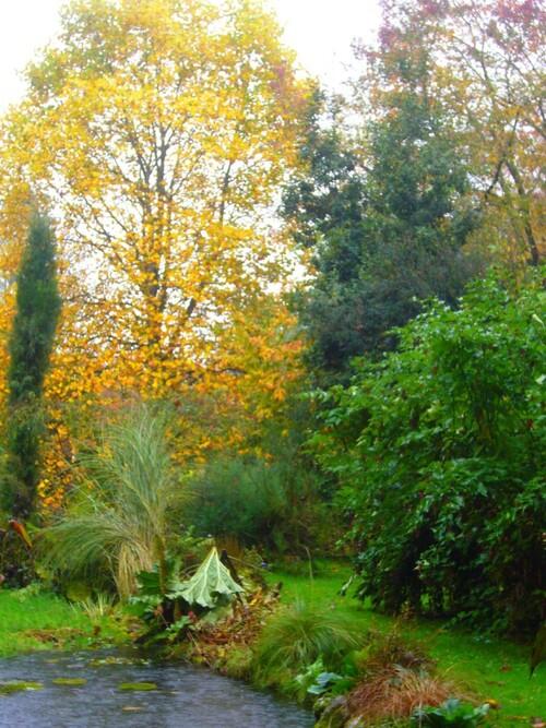 Novembre dans mon jardin