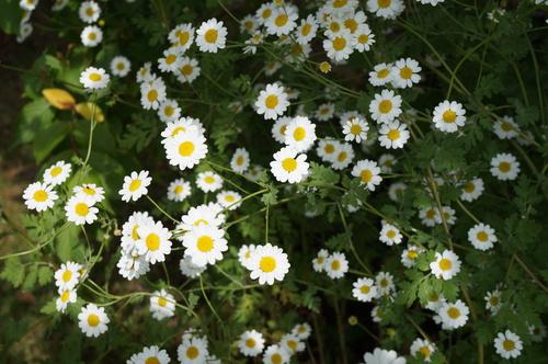 Les floraisons estivales en A