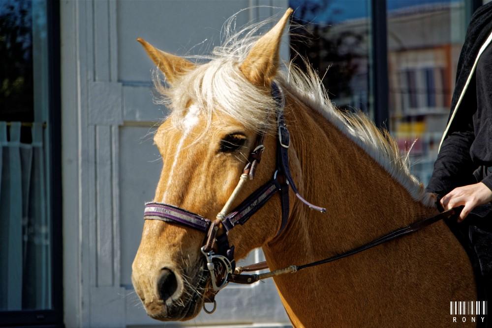 Portraits de chevaux