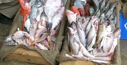 Tamda Ouguemoune: la mer, le soleil et... du poisson