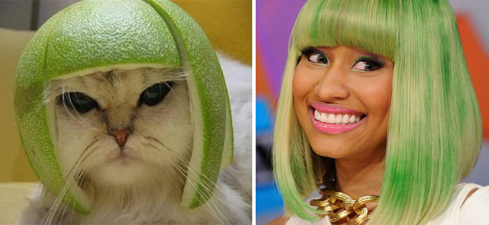 cat-looks-like-other-thing-lookalikes-celebrities-27__700