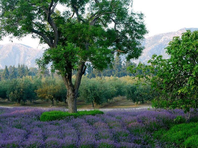 MARSEILLE - Mamiekéké et les contes de Provence 3