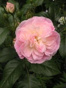Bouquet Parfait3