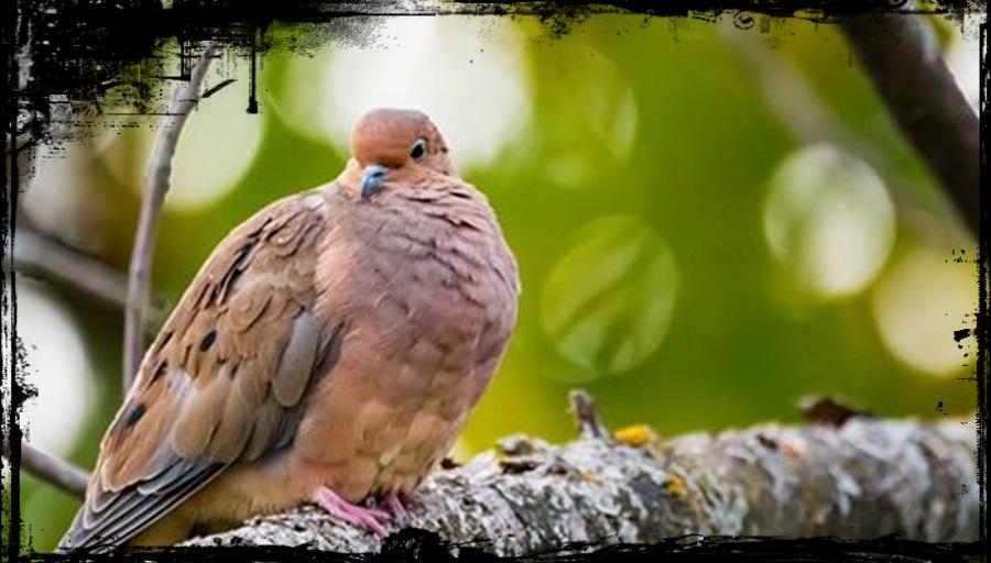Oiseaux du moment !!!