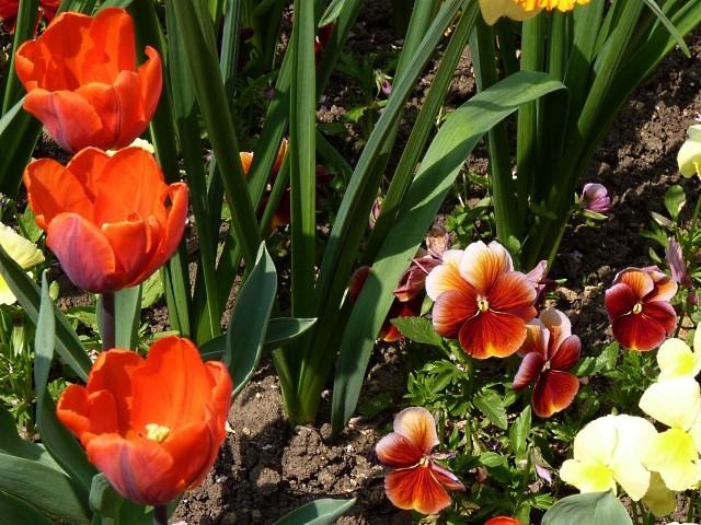Metz en fleurs 8 mp1357 2011