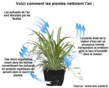 schema-comment-les-plantes-dépolluent