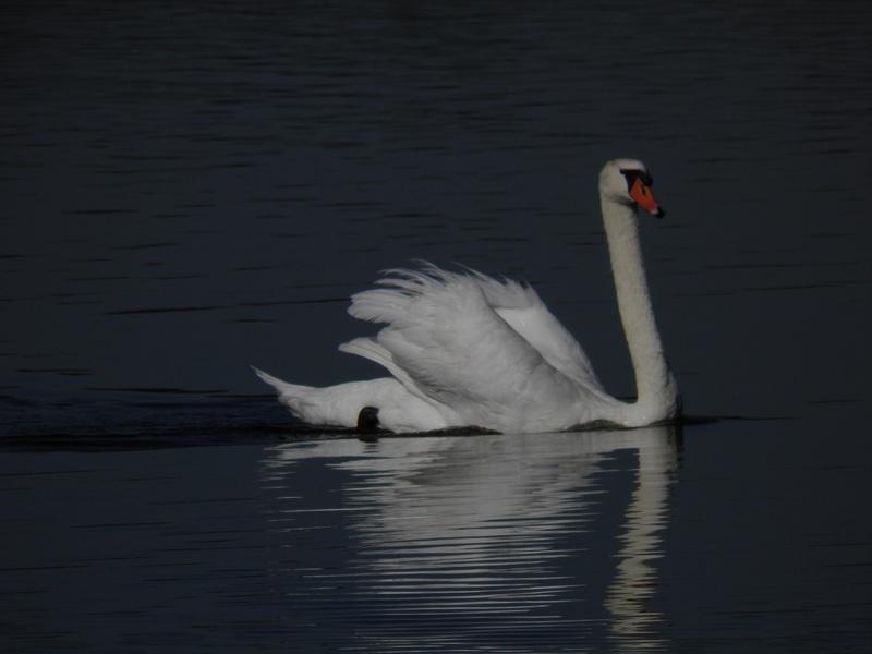 Balade au bord de l'eau