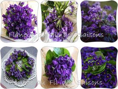 Les Violettes  - cartonnettes