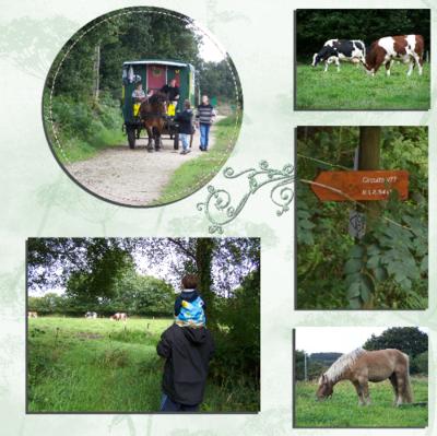 Blog de chipiron :Un chipiron dans les Landes, parcour de randonnée