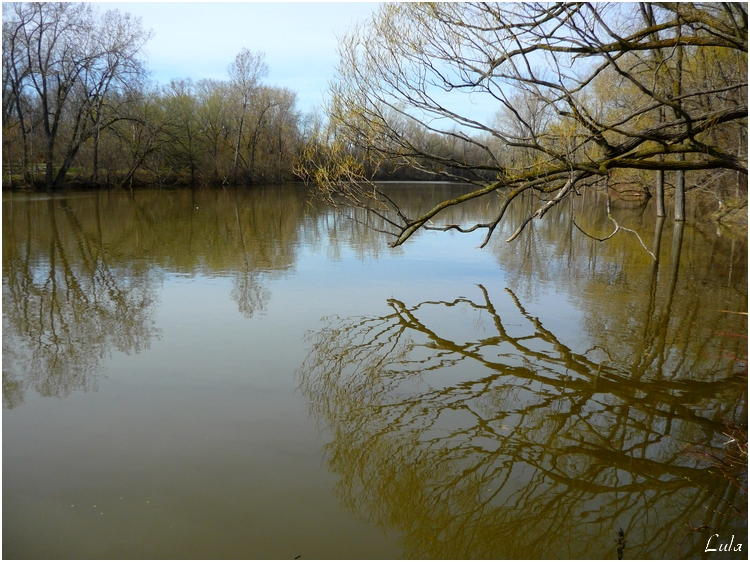 Rivière des prairies (le printemps)