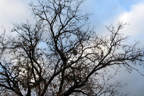 Le nid de frelon!