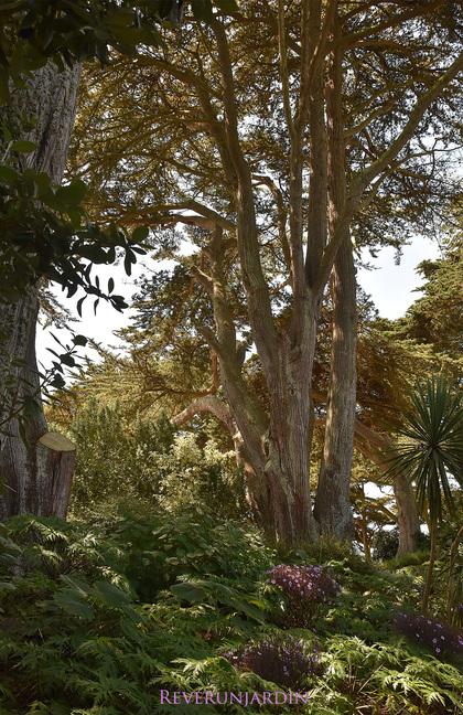 Le jardin Georges Delaselle