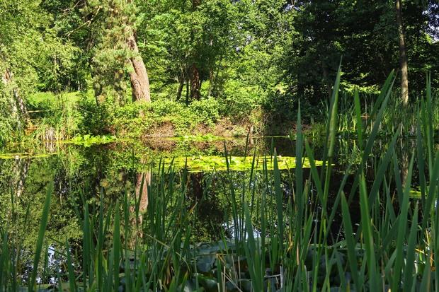 Les étangs en été