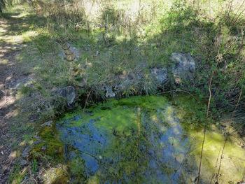 La source des Ribas