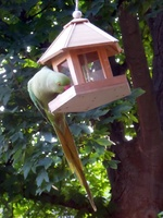 Noch mehr Vogelnachrichten