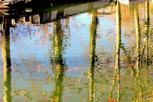 Au bord du Canal du Midi ... (2)