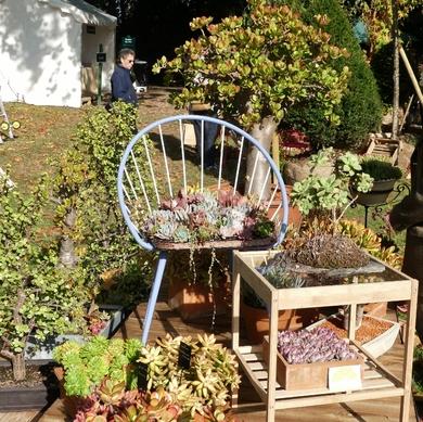 Journées des plantes de Chantilly : une édition d'automne haute en couleurs...