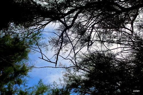 Ciel et branches