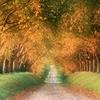 autumn_road,_cognac_region,_france - copie