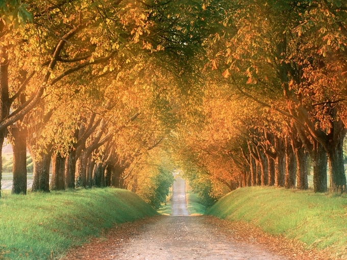 autumn_road,_cognac_region,_france - copie