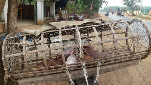 23 février: Kompong Cham à la frontière Vietnamienne