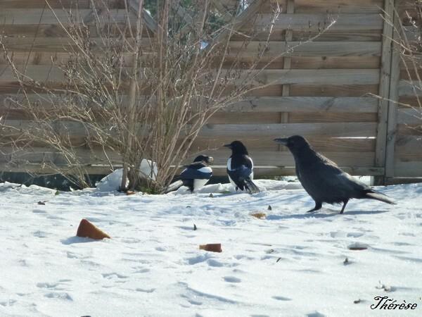 oiseaux--1-.JPG