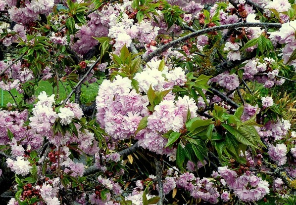 v02 - Fleurs