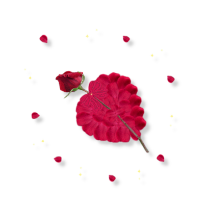 Rose coeur pétales