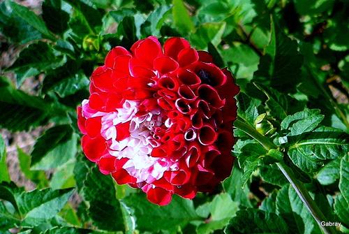 Dans mon jardin : les fleurs en octobre...