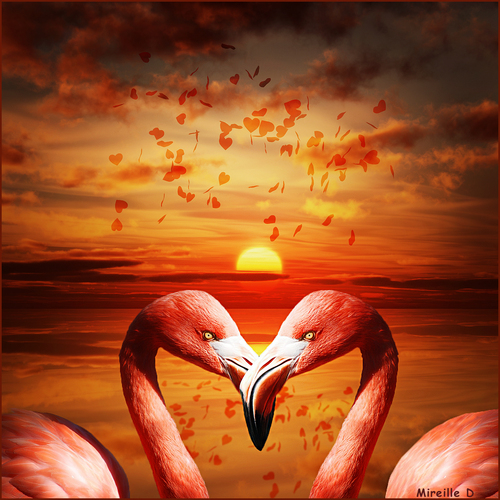 Amour en Rose (Photomontage)
