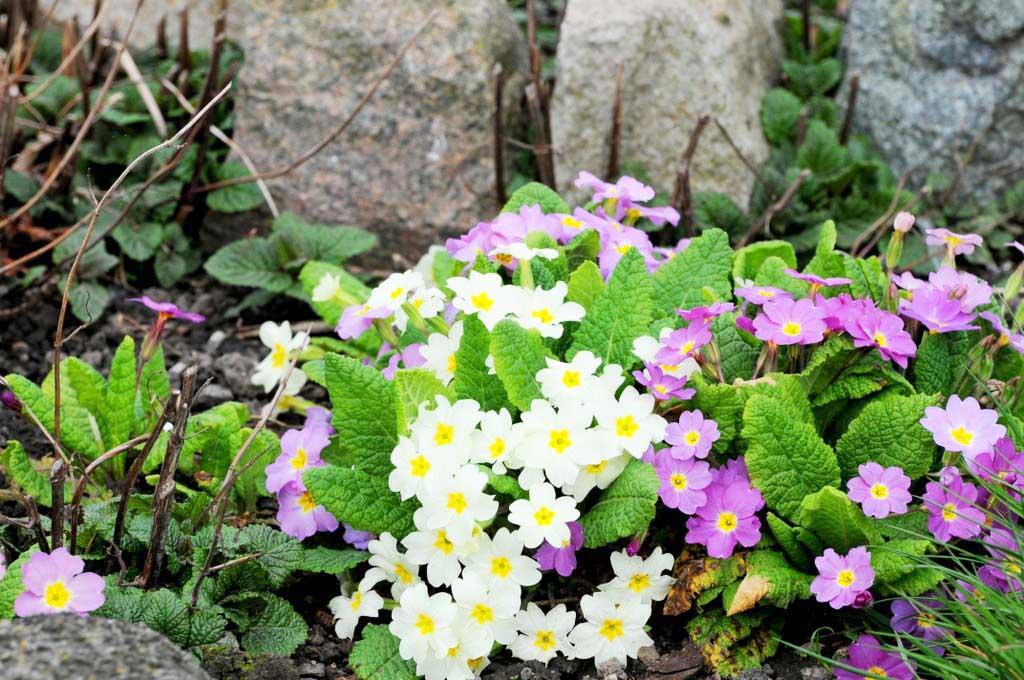 Les fleurs de mon jardin...Suite