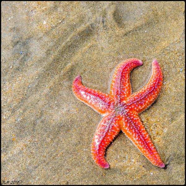 Patrick Star...