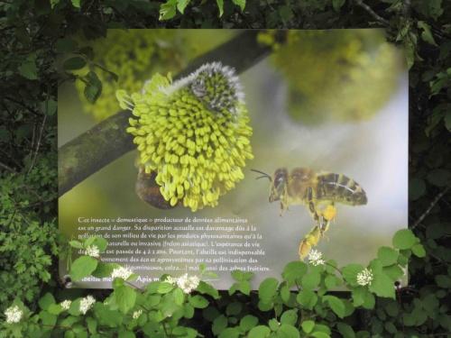 Haies & arbres champêtres, refuges de biodiversité