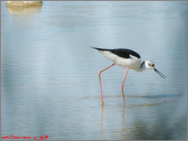 Domaine des oiseaux (09)