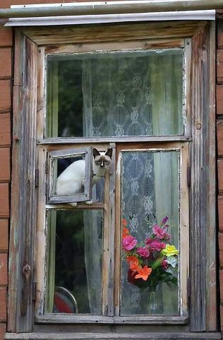 chat fenetres