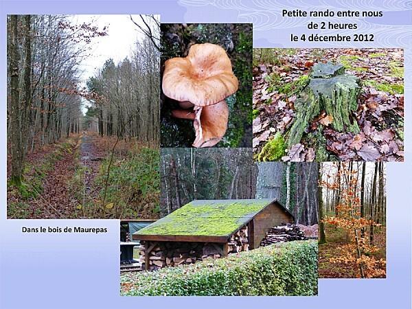 Bois Maurepas-11