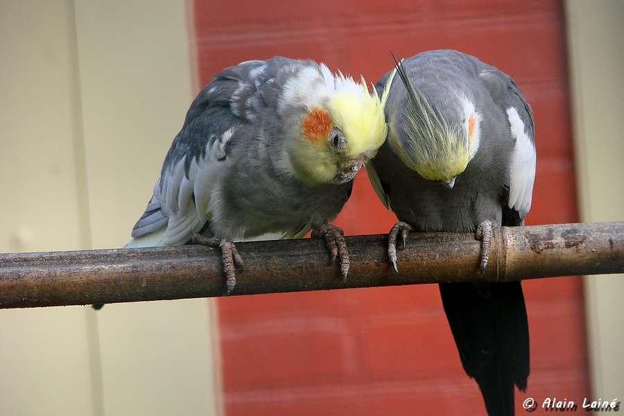 Nos amis les oiseaux - THabor - Rennes (2/2)