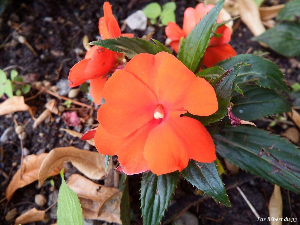 des fleurs à Embrun (05)